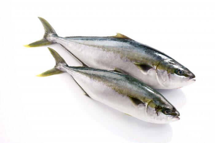 тунец желтохвостый