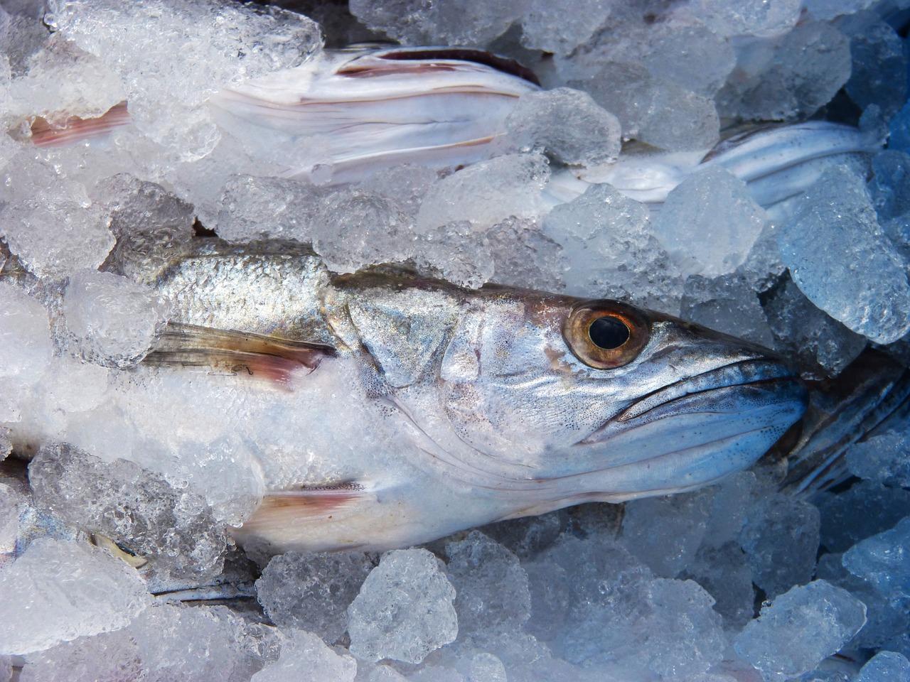 Сколько варить рыбу хек
