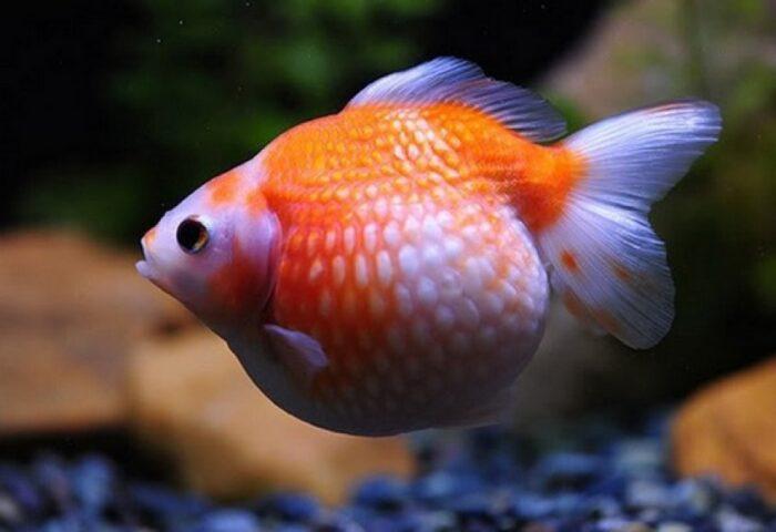 Заболевания рыб