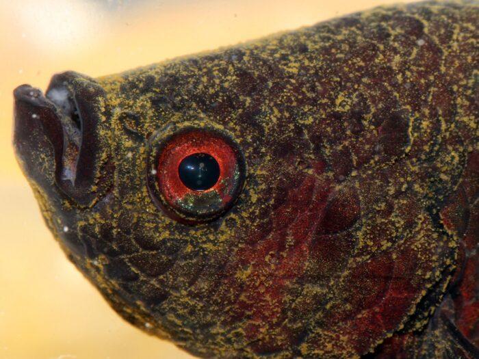 Заболевание у рыб